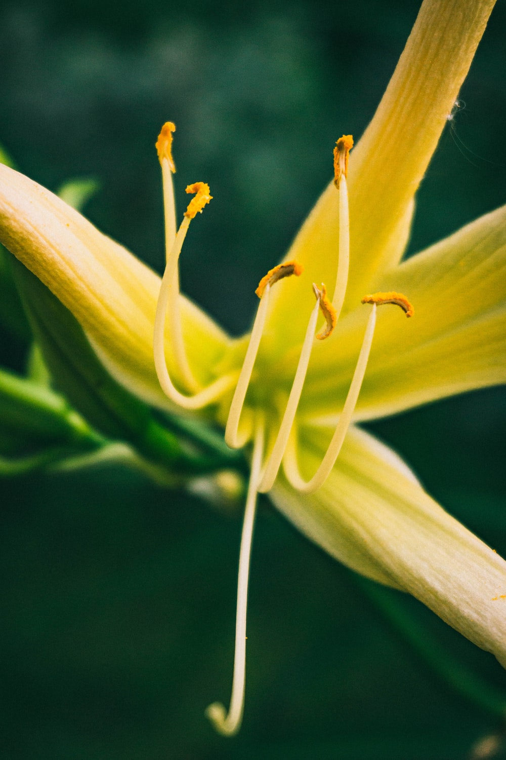 yellow flower bud in close up photography