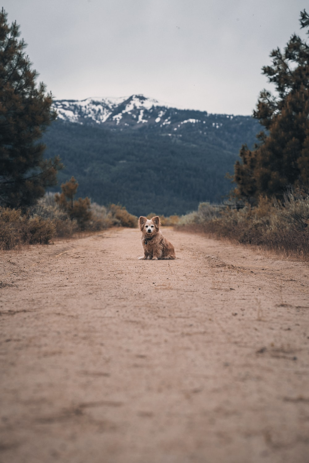 brown and white animal on brown dirt road during daytime