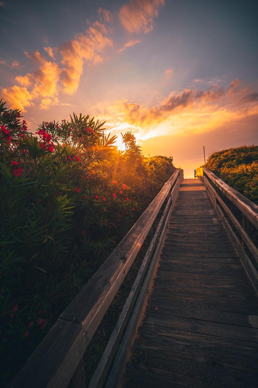 brown wooden bridge near green plants during sunset