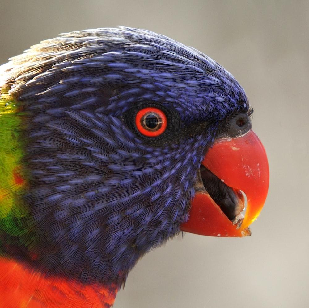 blue yellow green and orange bird