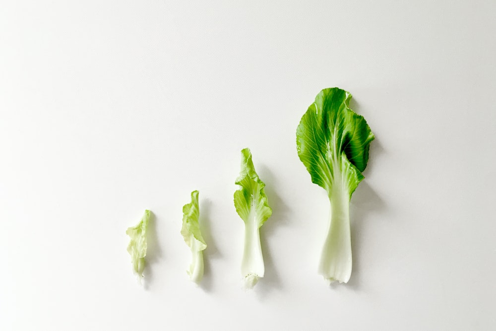 green vegetable on white surface