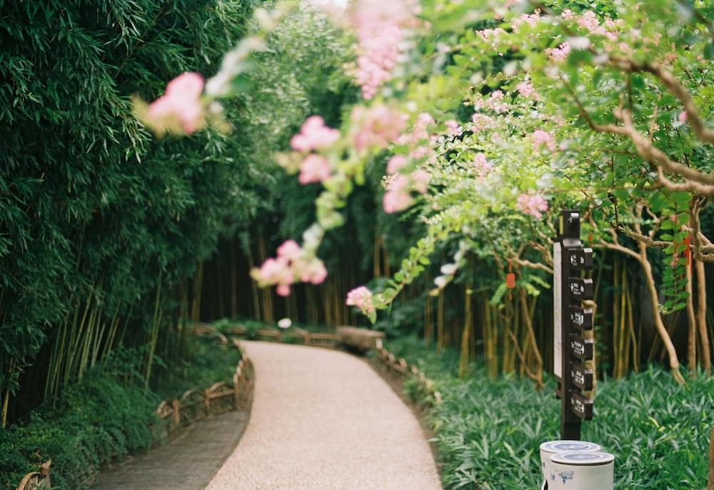 green plants beside gray concrete pathway