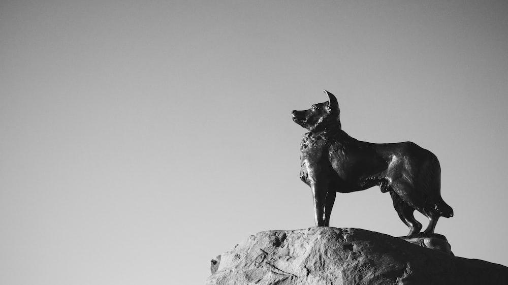 black short coat dog on rock