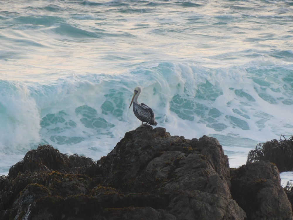 white and black bird on rock near body of water during daytime