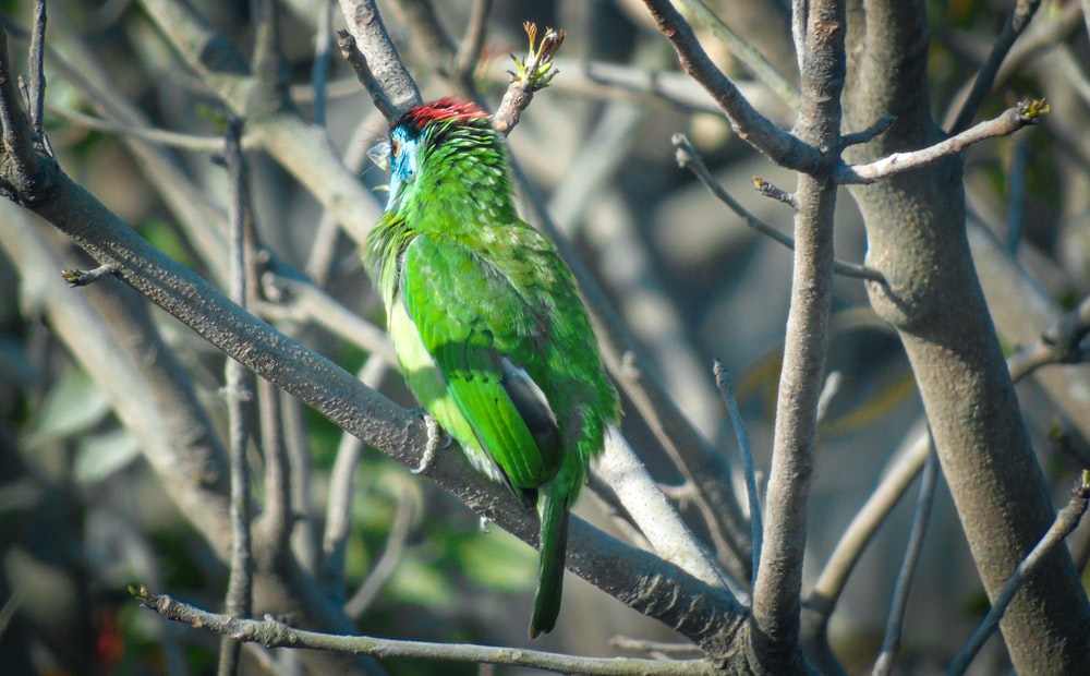 green and red bird on tree branch