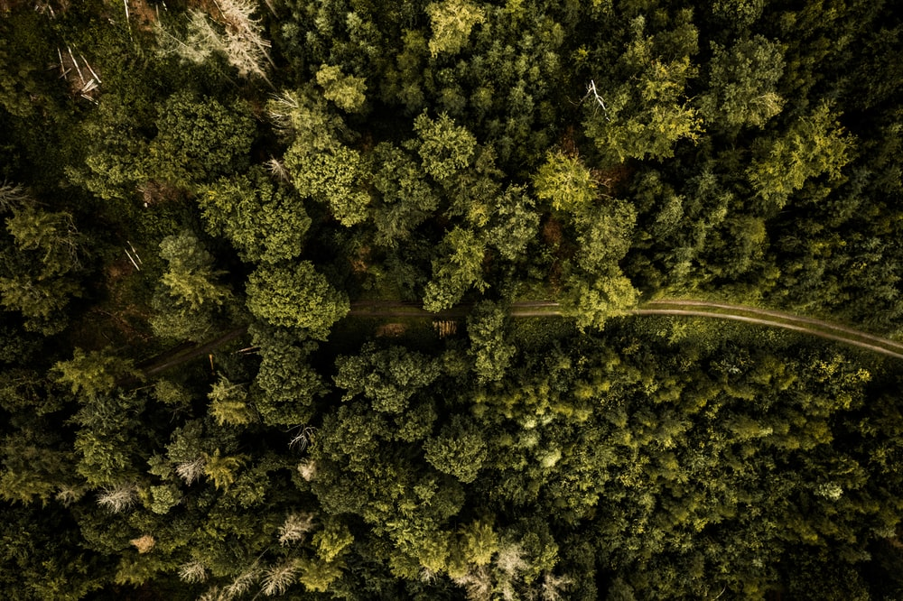 aerial view of green trees during daytime