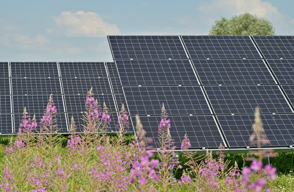 black solar panels on purple flower field during daytime
