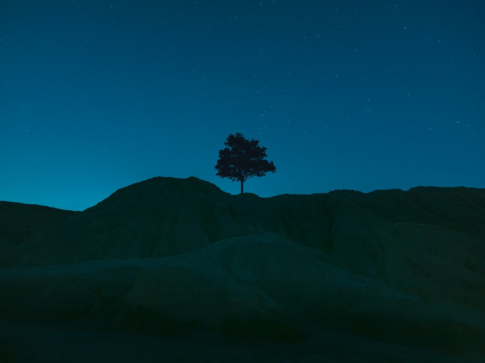 tree on top of mountain during night time