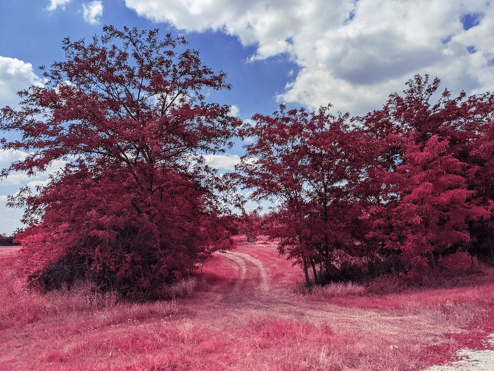 red leaf trees under blue sky during daytime