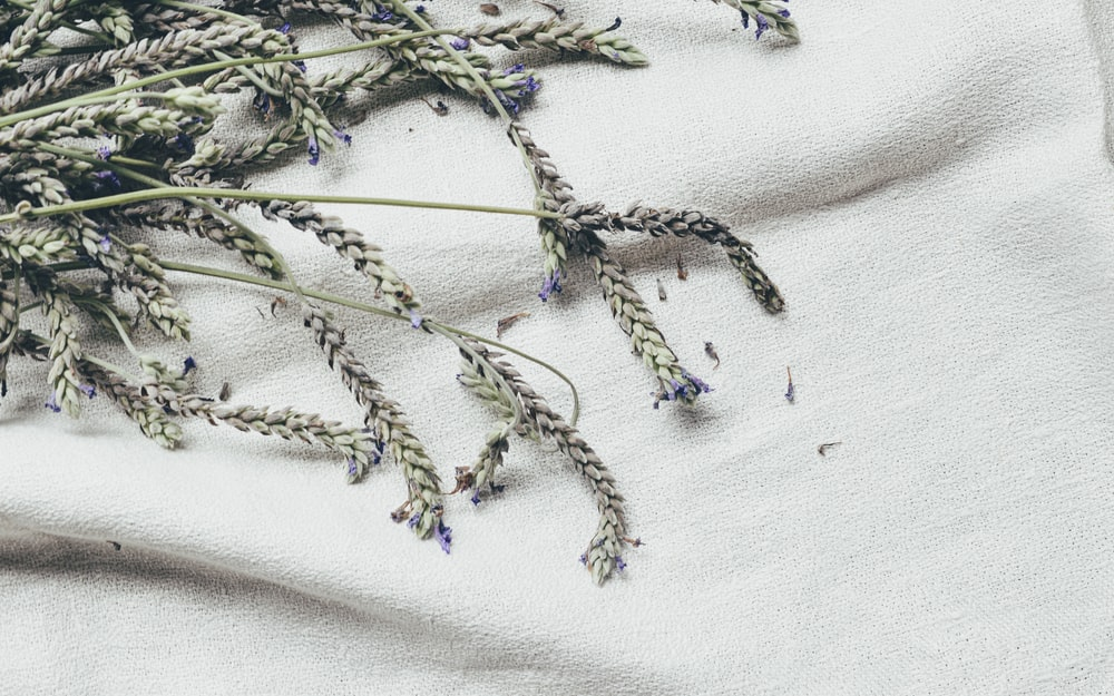 purple and green flowers on white textile