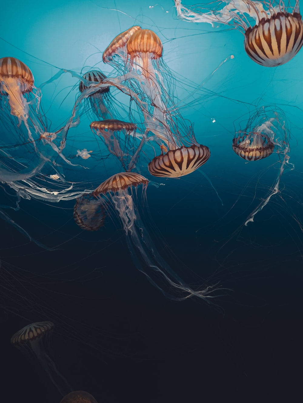 brown and white jellyfish under water