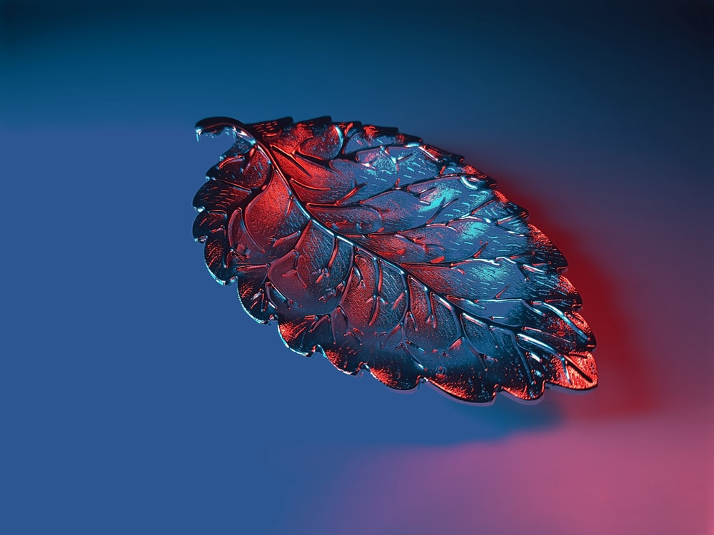 red and blue flower in close up photography