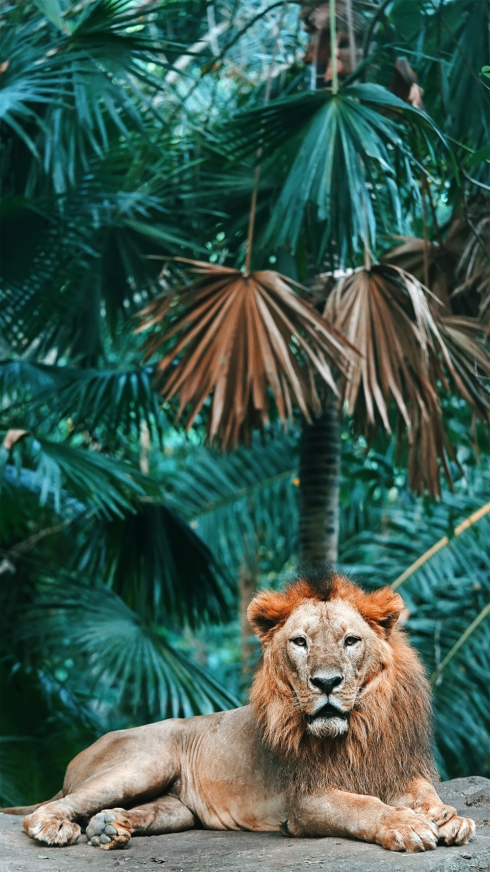 brown lion in green leaves