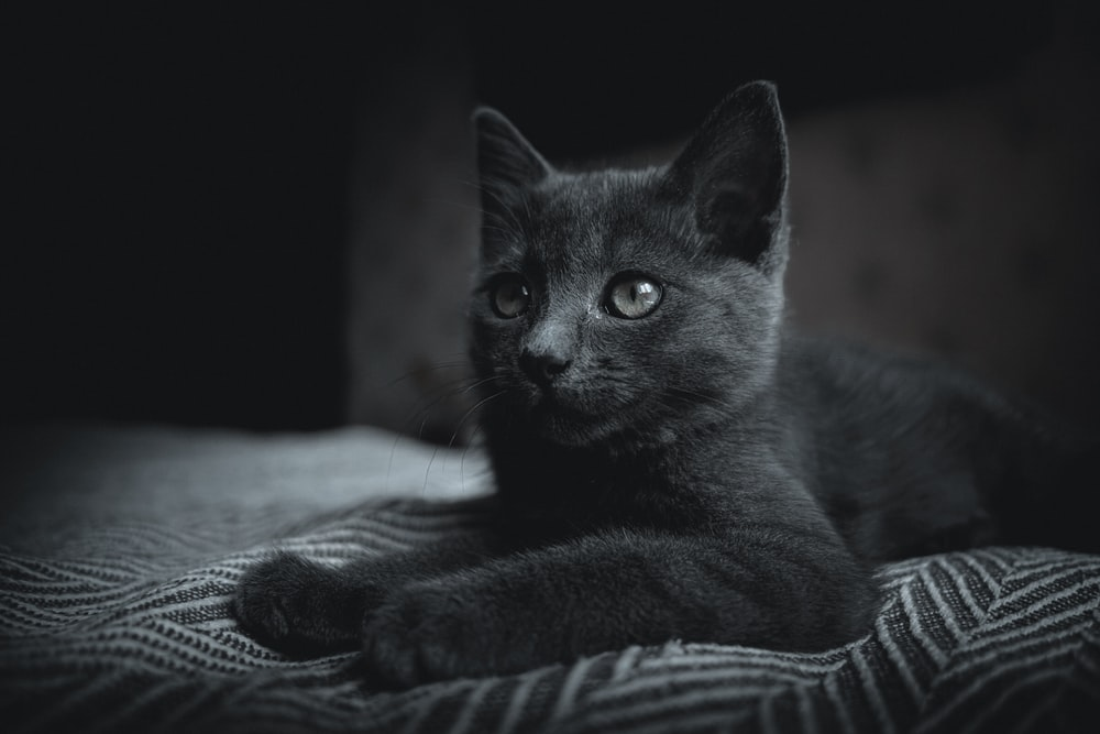 black cat on white and black stripe textile