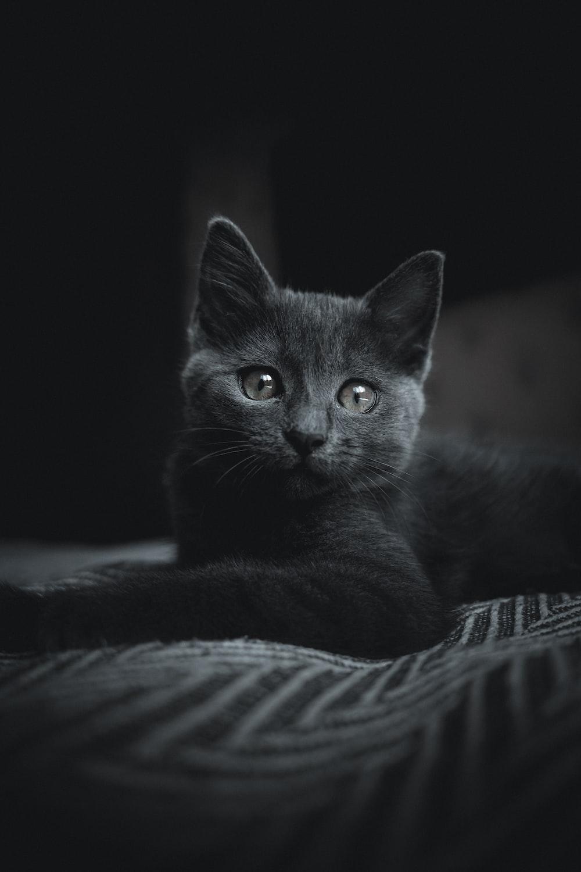 black cat on white and black textile
