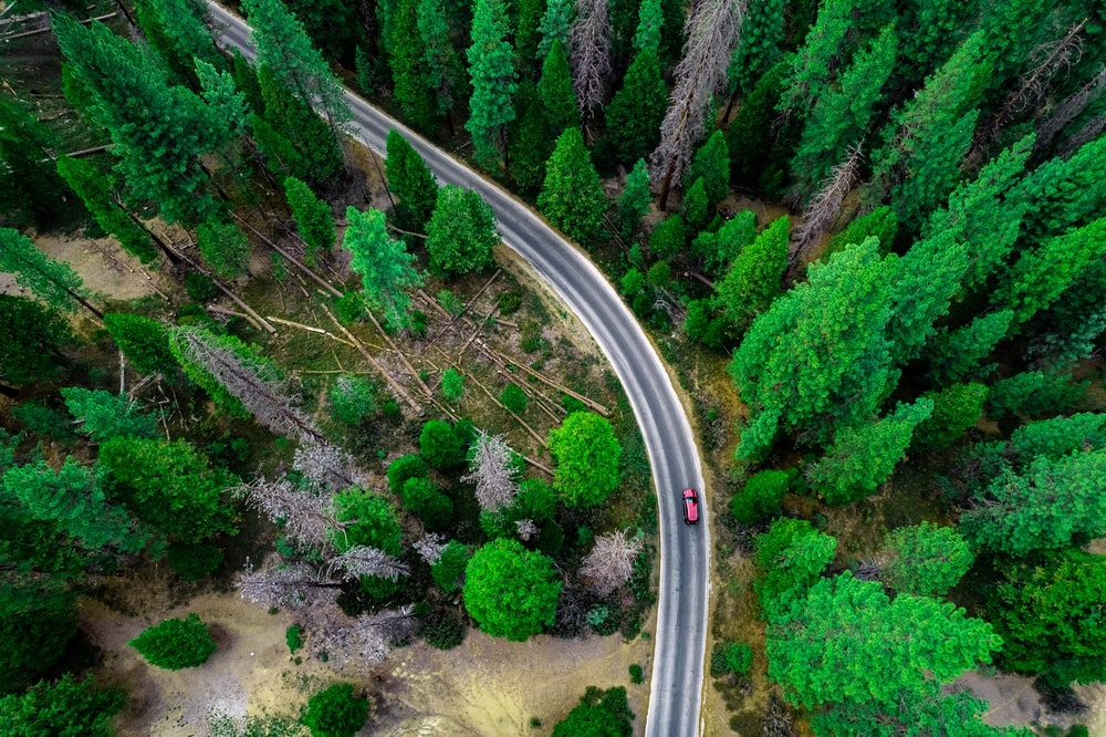 aerial view of green trees and gray road