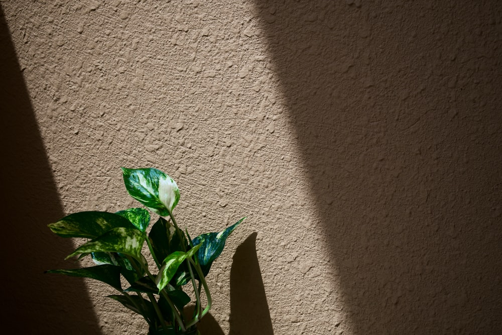green leaves on white wall