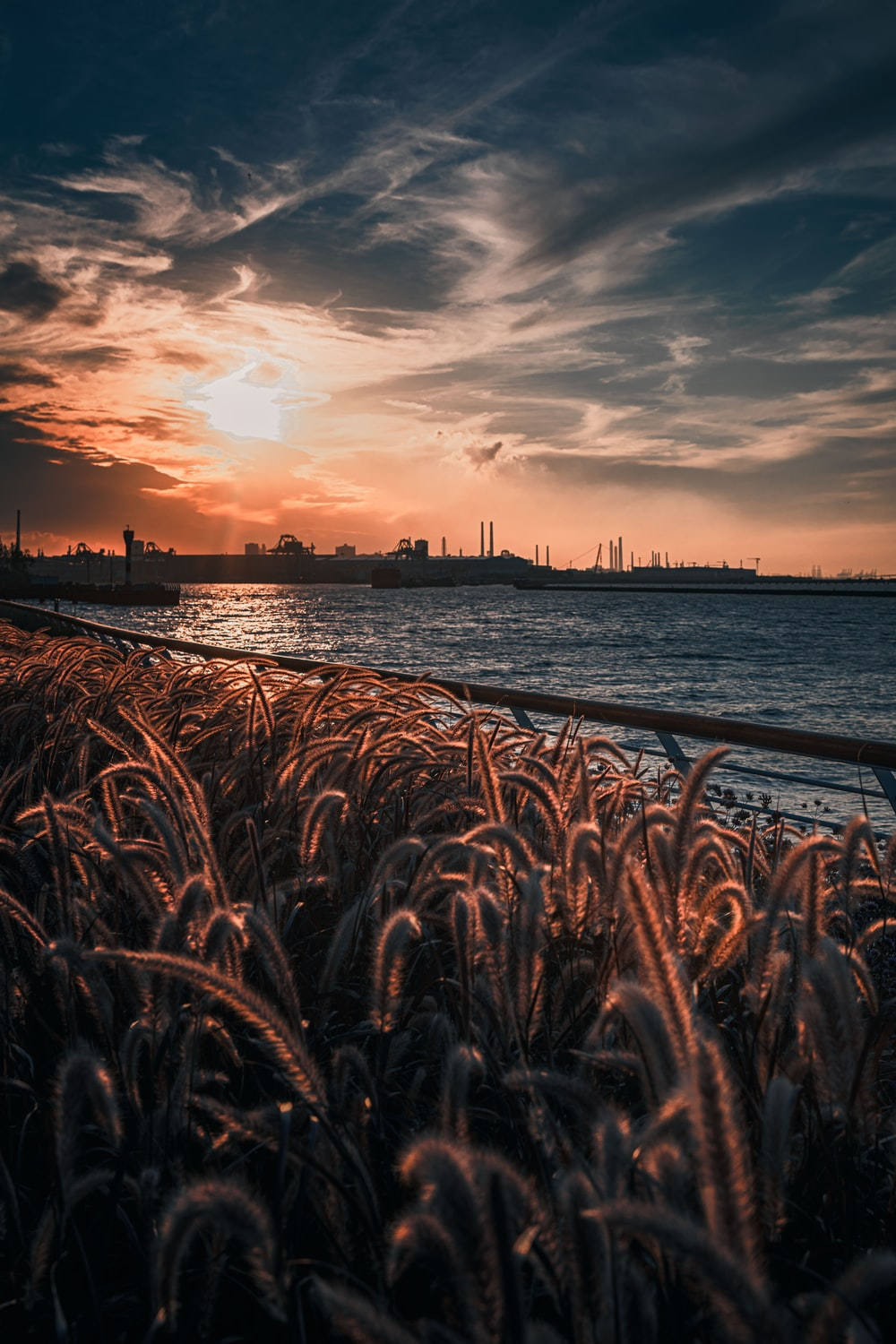 brown grass near body of water during sunset