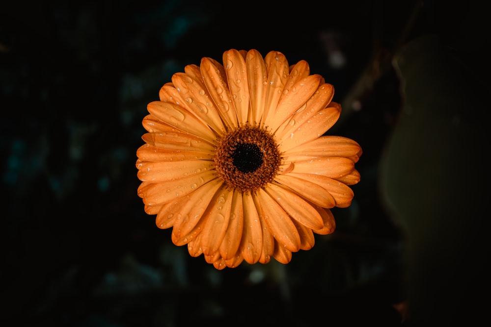 orange flower in tilt shift lens
