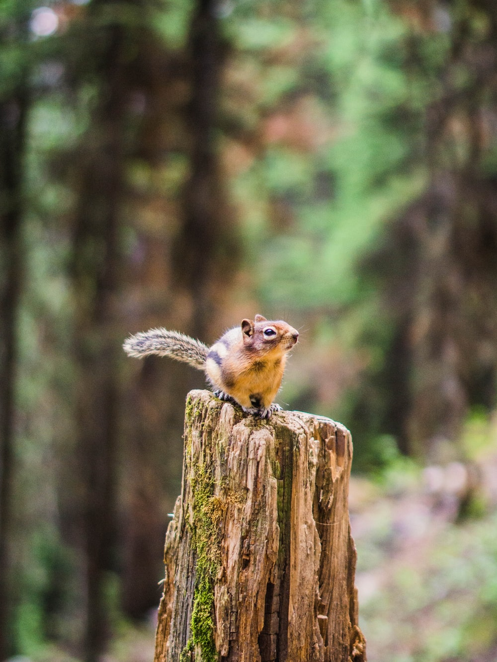 brown squirrel on brown wooden post during daytime