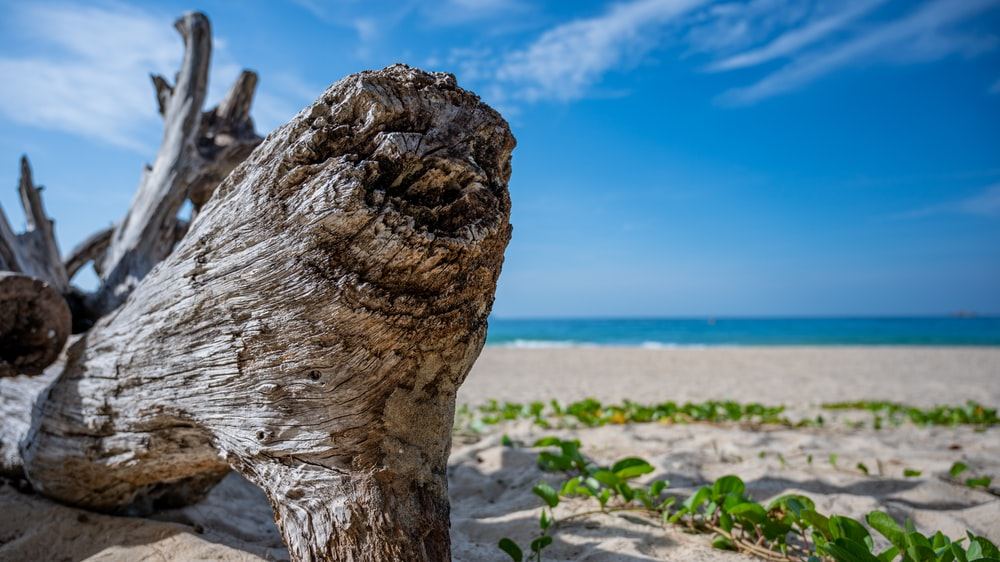 brown tree trunk on white sand during daytime