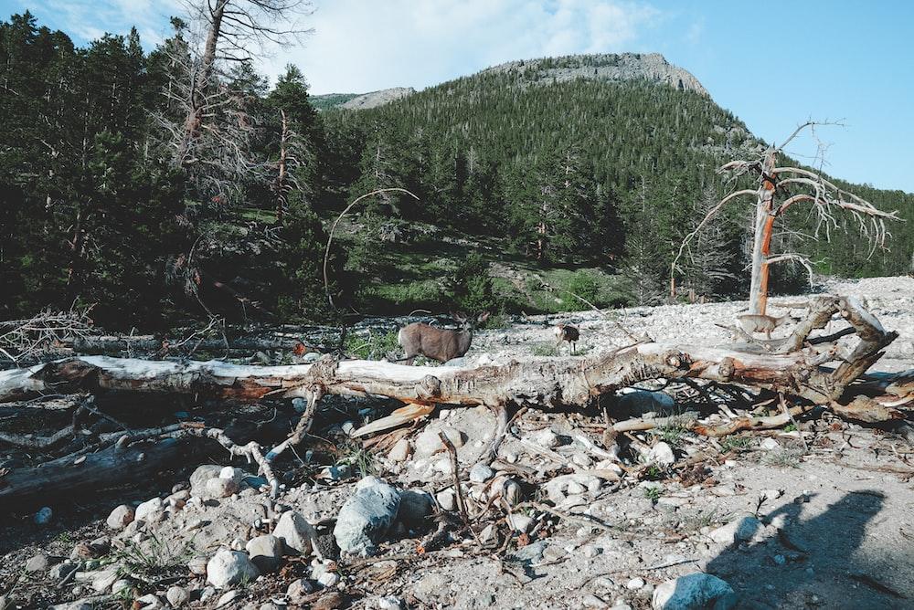 brown wood log on river