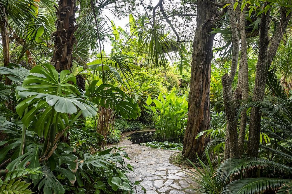green banana trees and plants