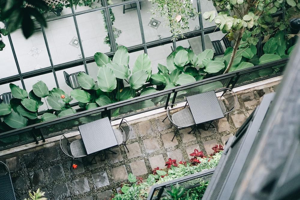 green plants on white plastic pot