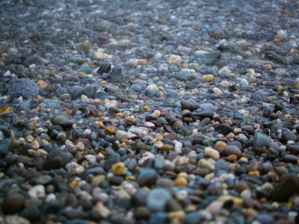 gray and brown pebbles during daytime