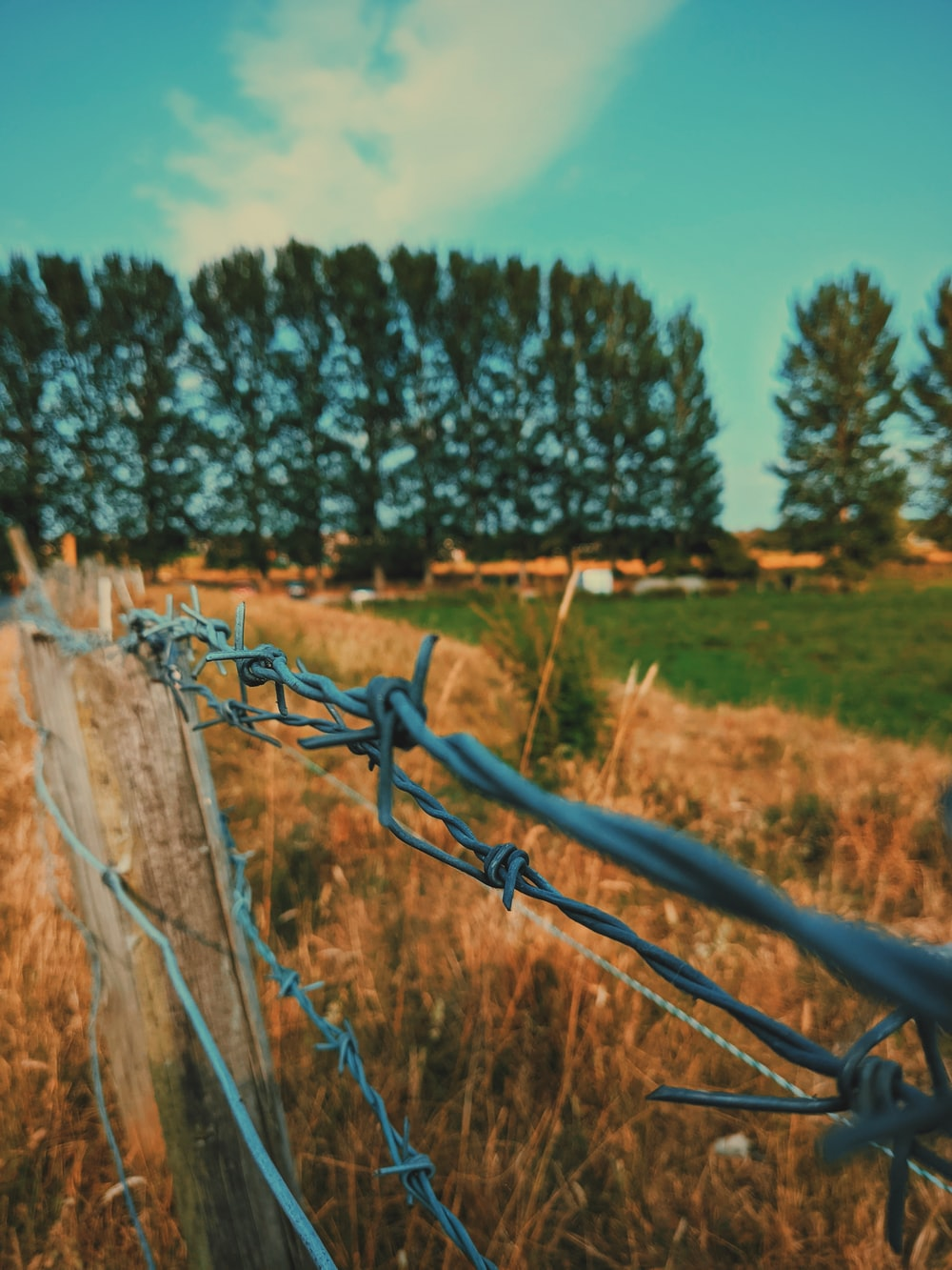gray barbwire fence on brown grass field during daytime