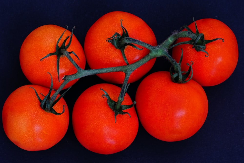 red tomato on blue background