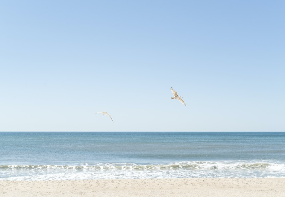 birds flying over the sea during daytime