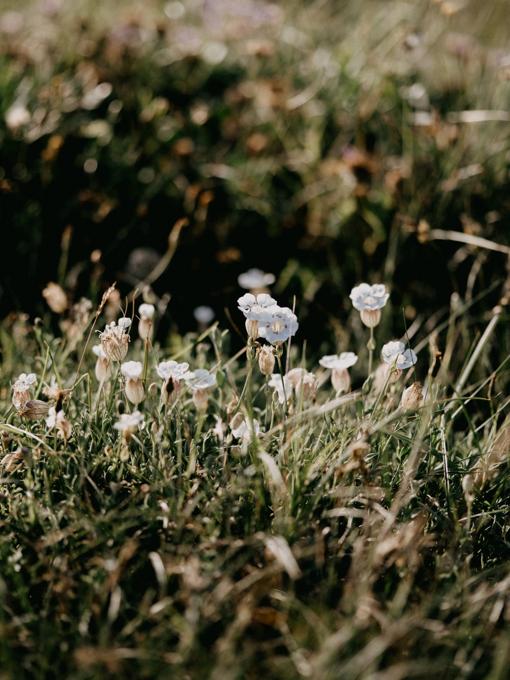white flowers on green grass during daytime