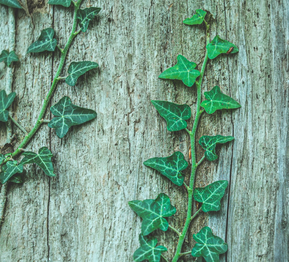 green leaves on gray wooden surface