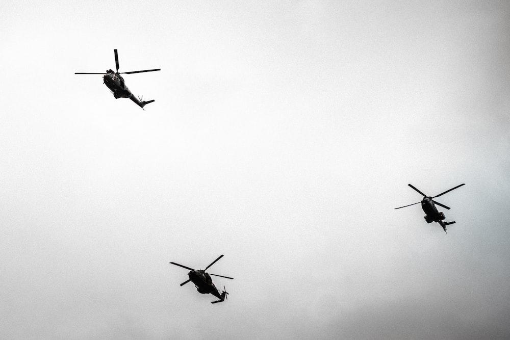 three birds flying in the sky
