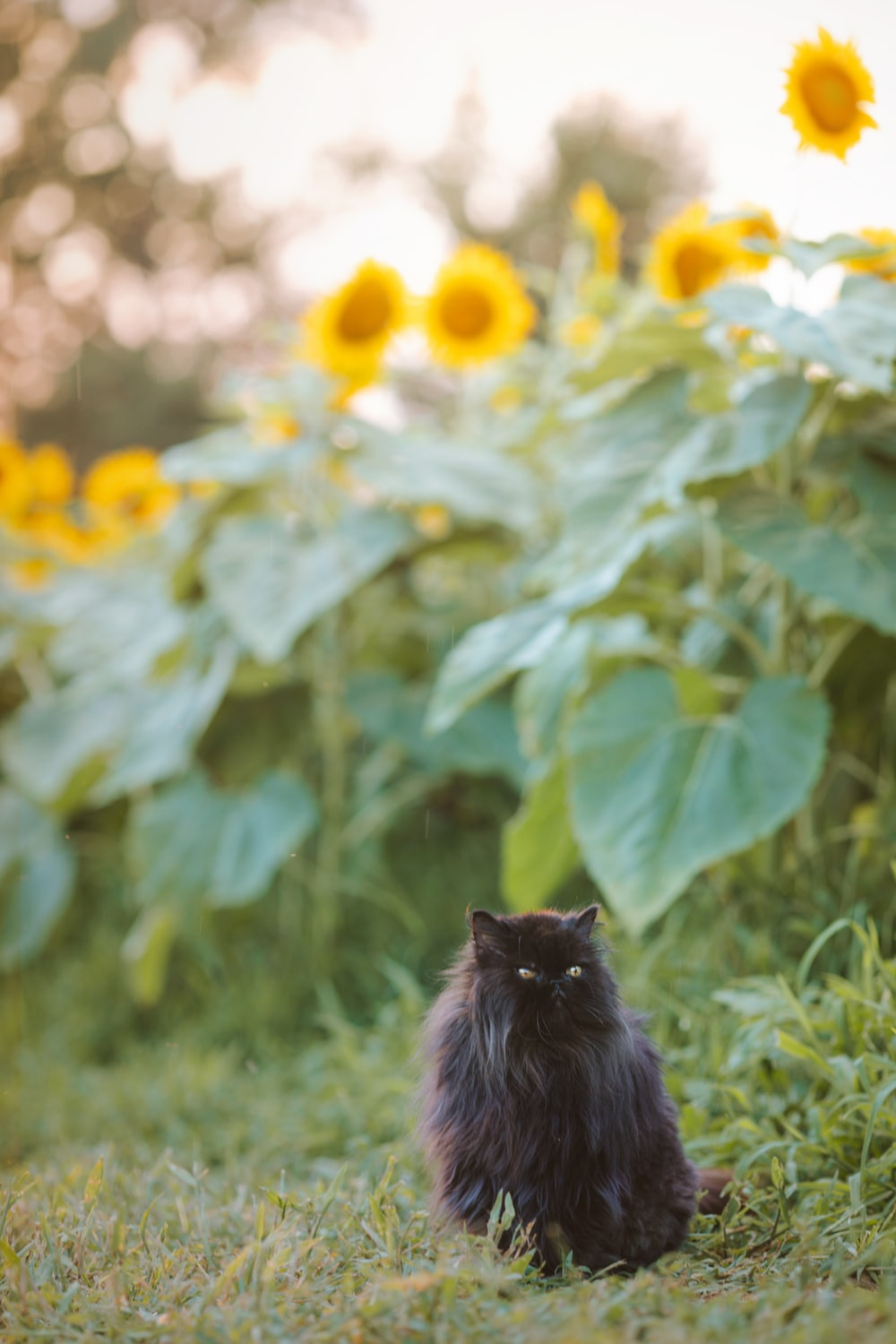 black cat on green grass during daytime