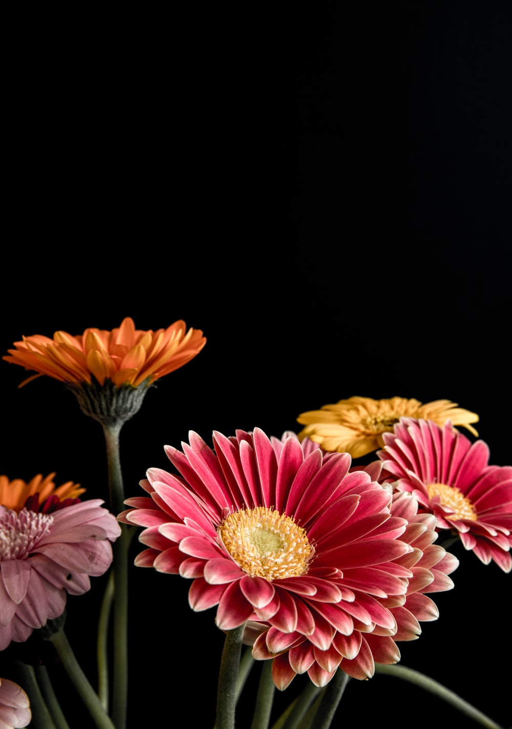 pink and yellow flowers on black background