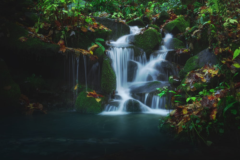 water falls in the middle of green plants