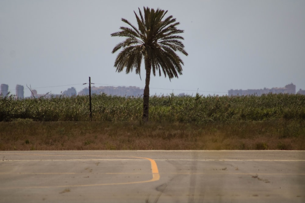 green palm tree beside road during daytime