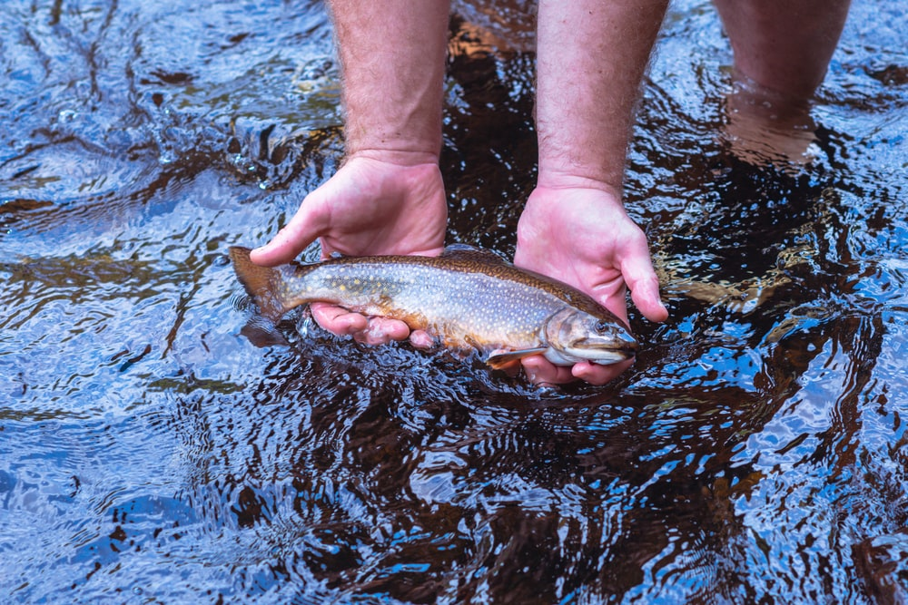 person holding brown and black fish