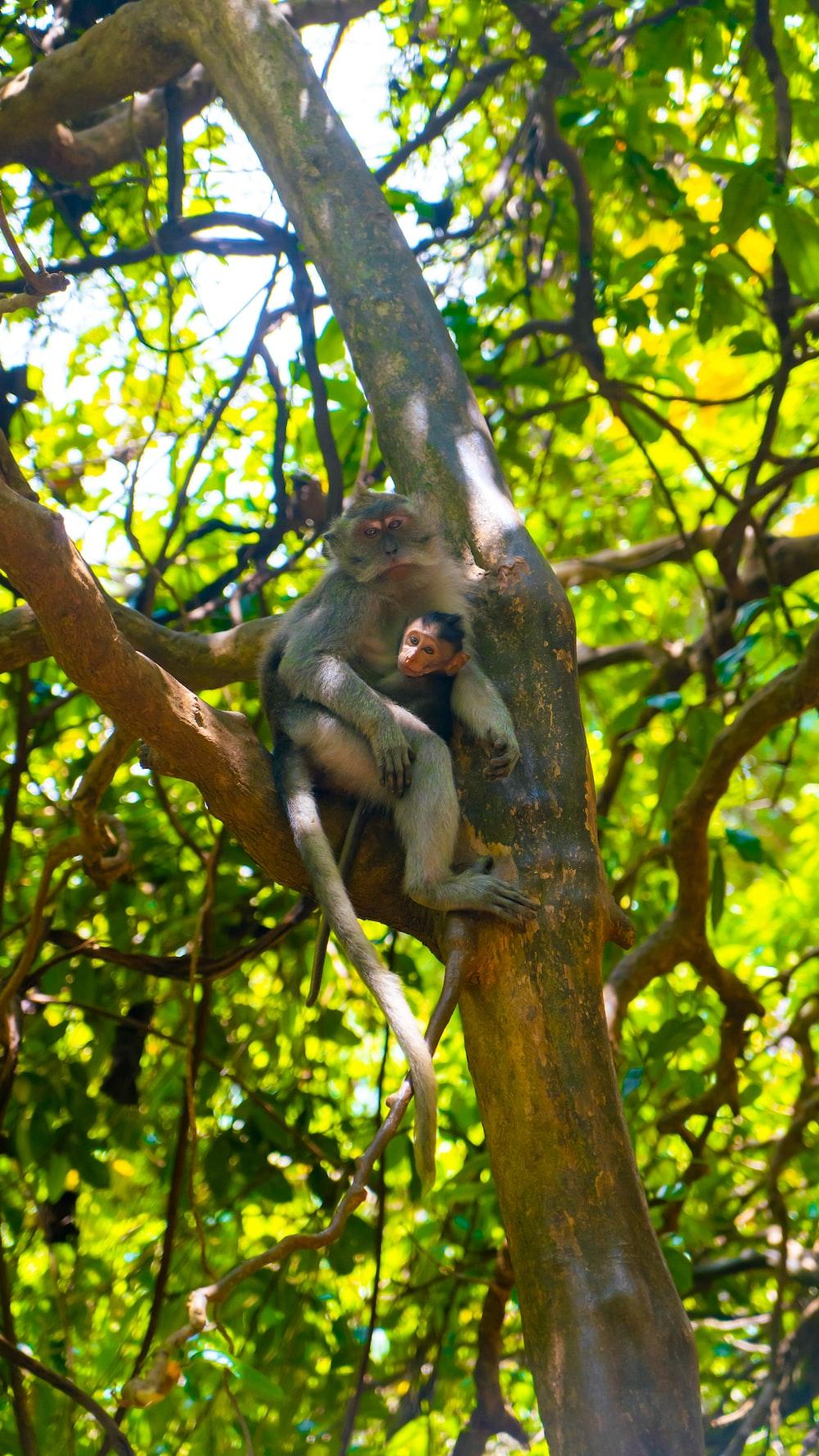monkey on tree branch during daytime