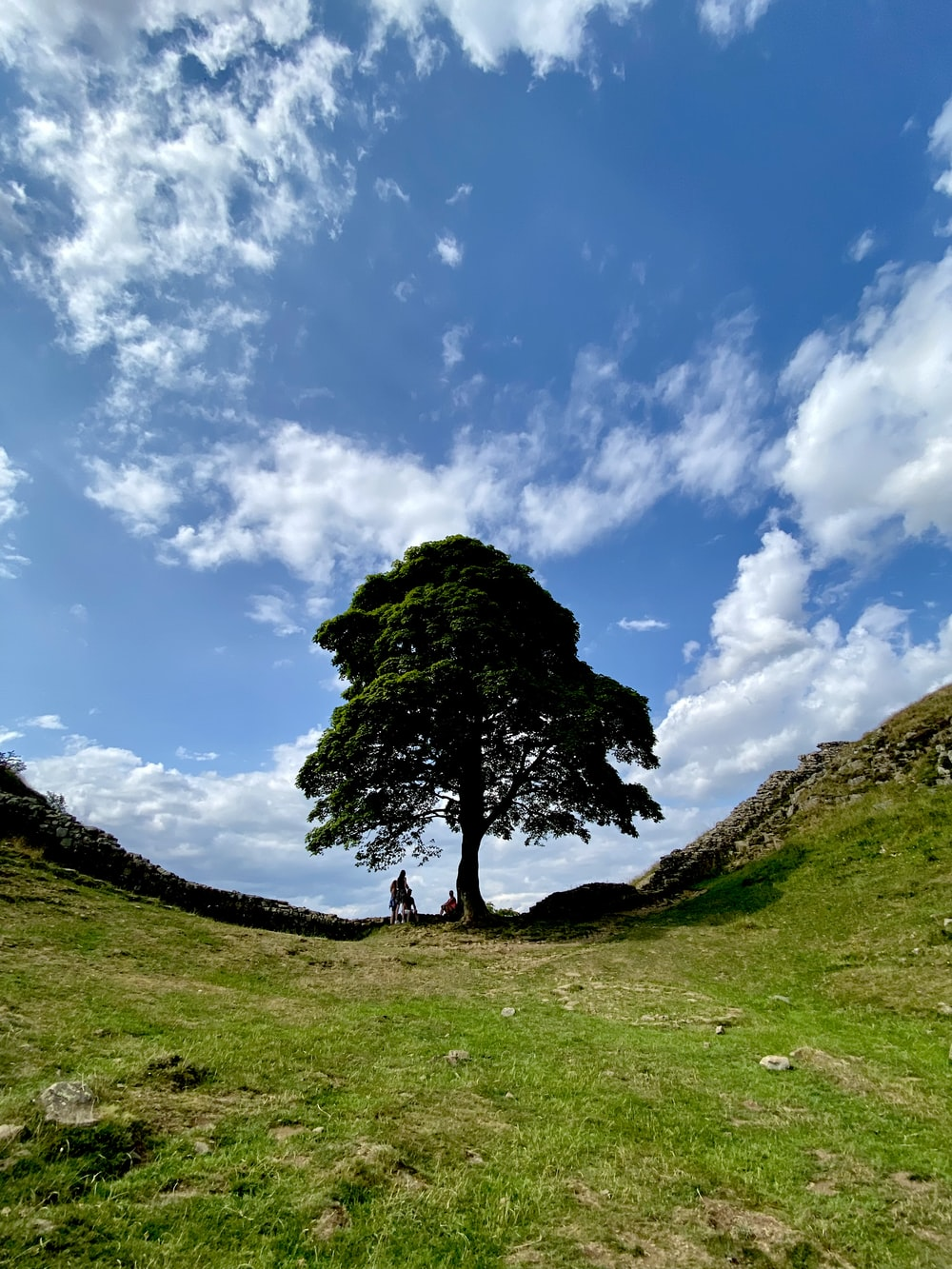 green tree on green grass field under blue sky and white clouds during daytime