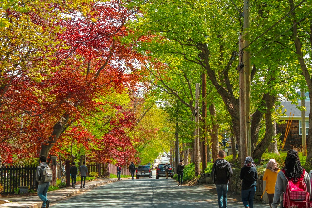 people walking on sidewalk with trees on the side