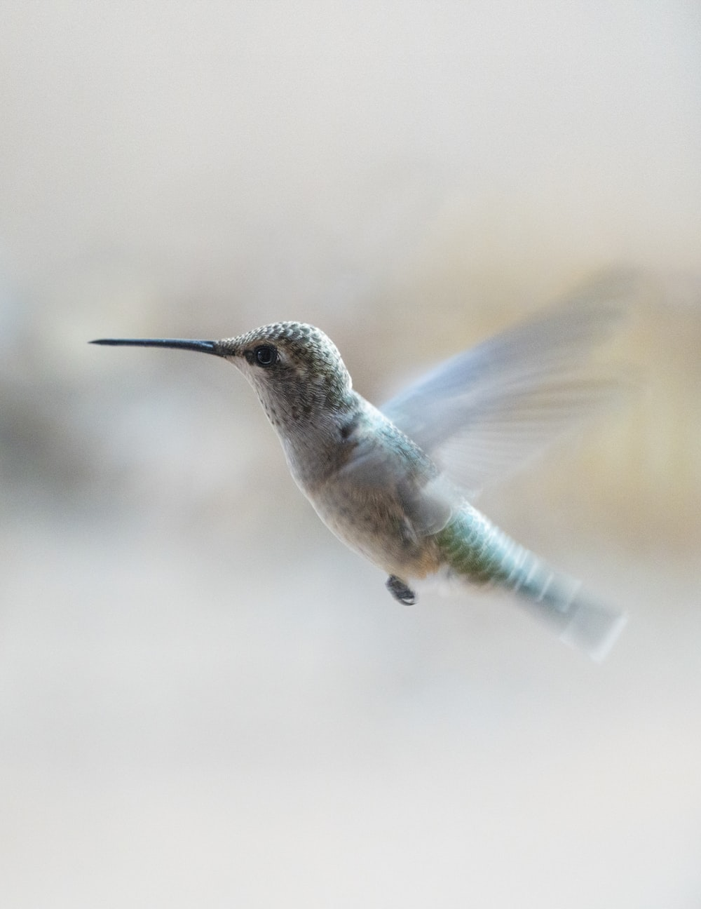 brown and black humming bird flying