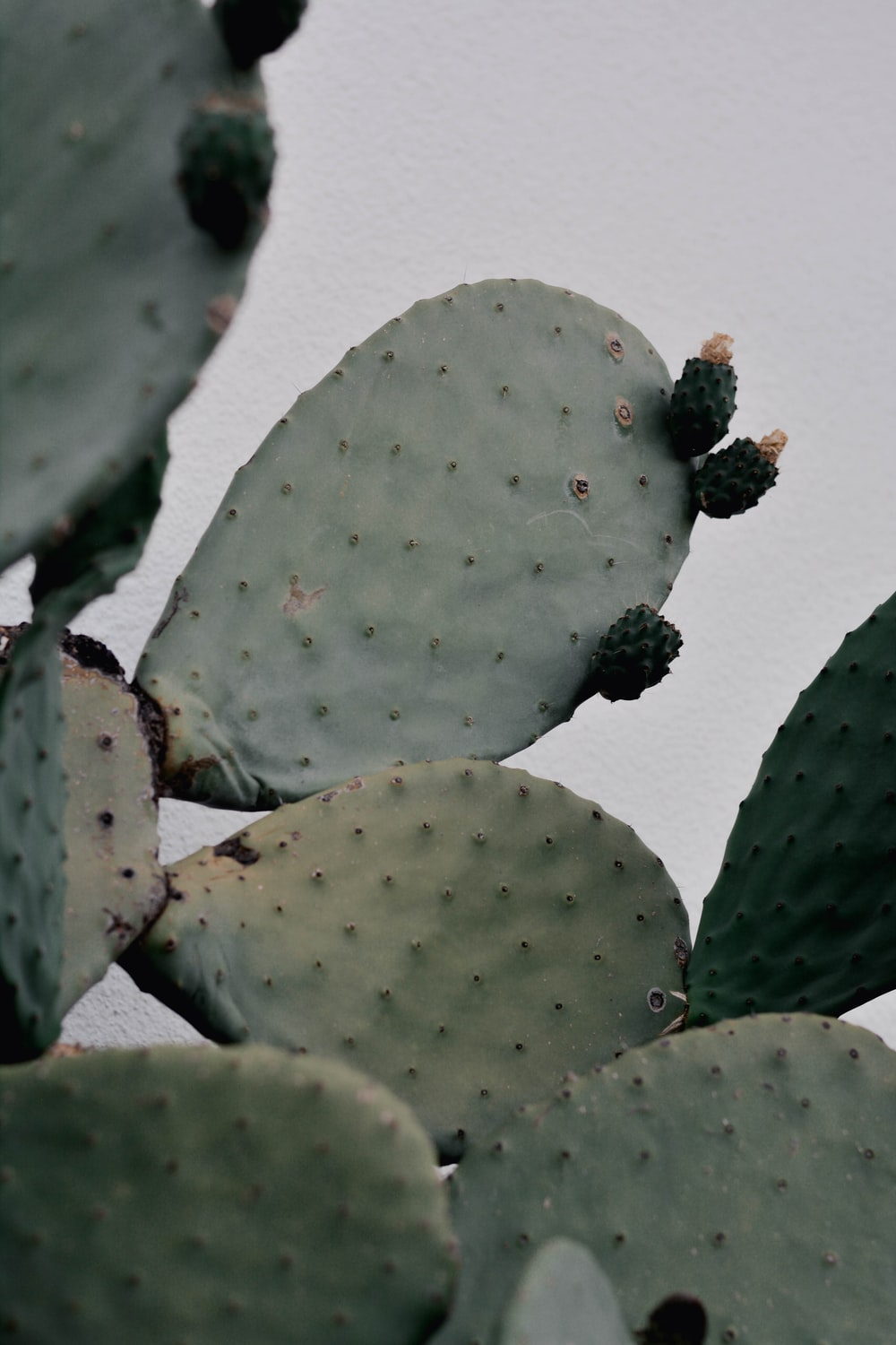green cactus plant on white surface