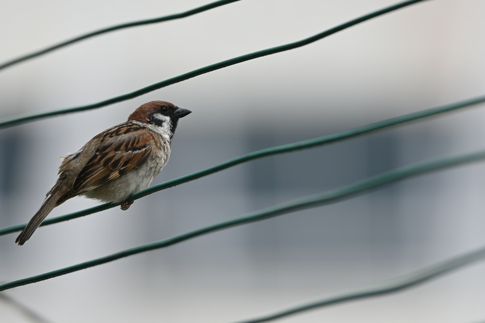 brown and white bird on green wire