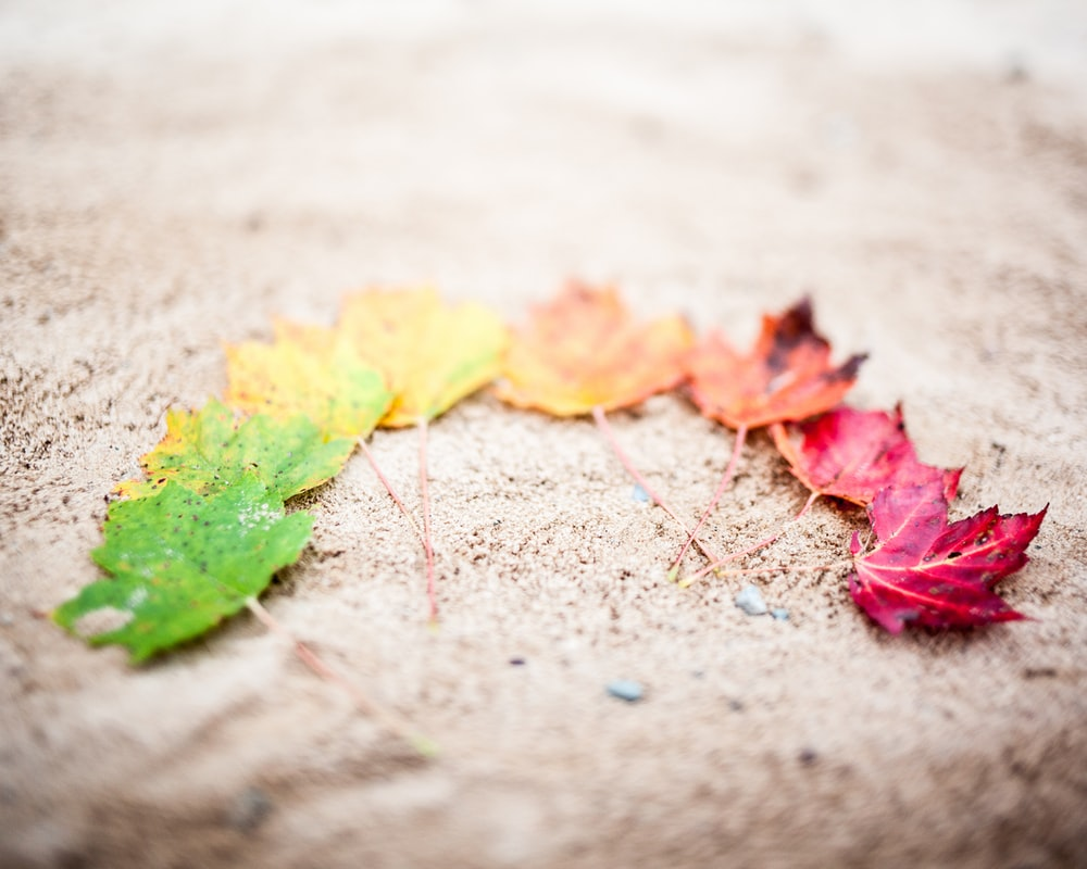 red yellow and green maple leaves on gray concrete floor