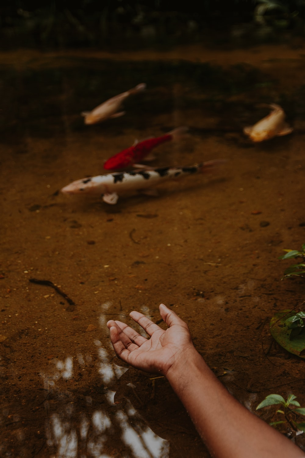 person holding silver fish on water