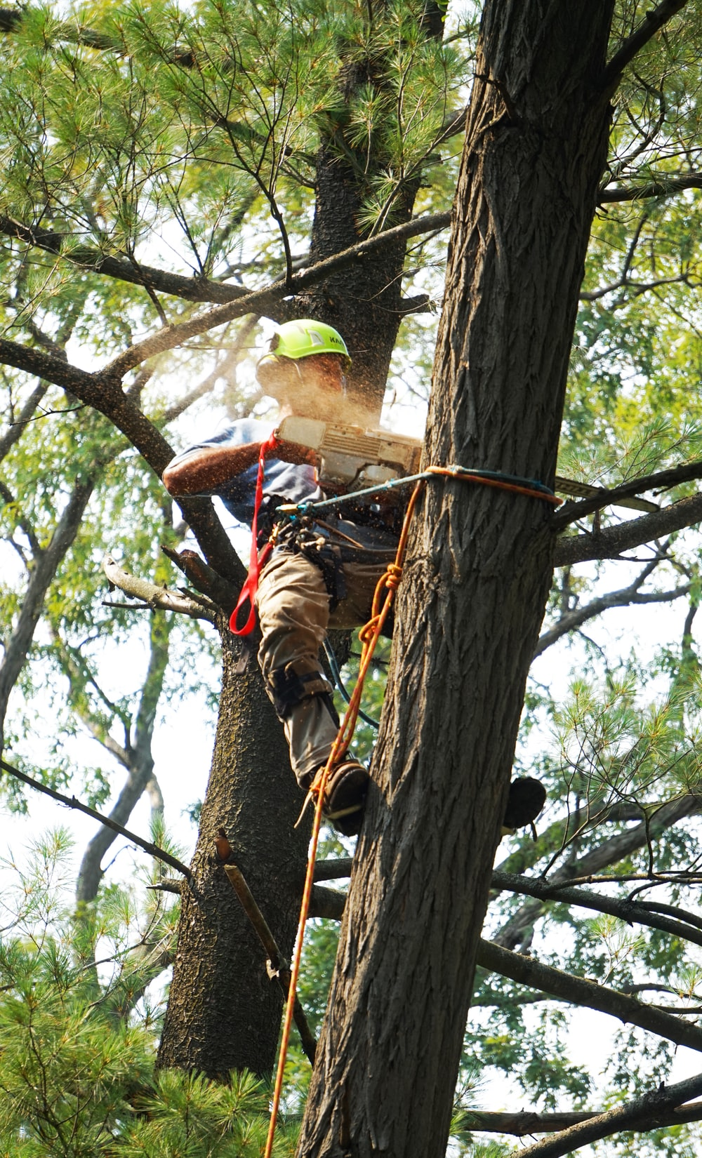man in red and black shirt climbing on brown tree during daytime