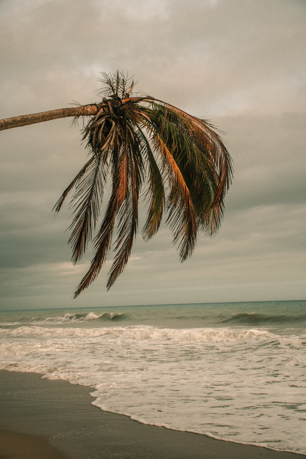 palm tree near sea under cloudy sky during daytime